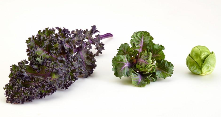kalettes-il-nuovo-superfood-ovvero-cavolini-di-bruxelles-in-incognito