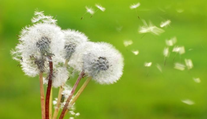 allergie-stagionali-riconoscerle-per-combatterle