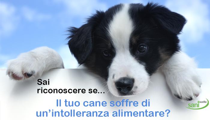 Il tuo cane soffre di un'intolleranza alimentare?