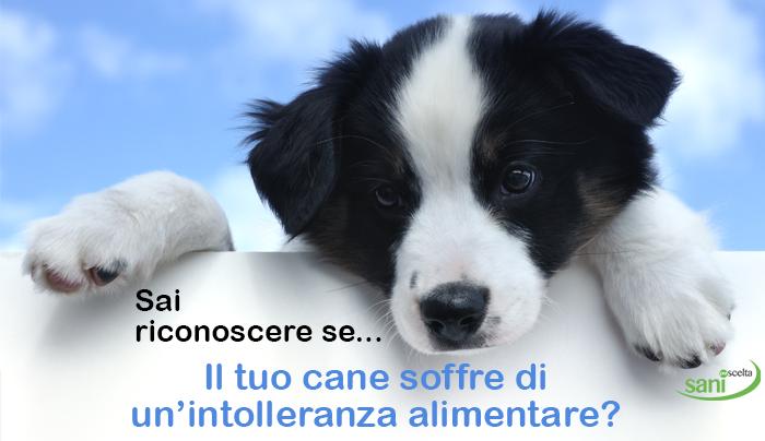 sai-riconoscere-se-il-tuo-cane-soffre-di-unintolleranza-alimentare