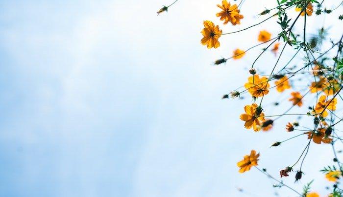 ma-la-primavera-non-lo-sapeva