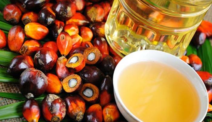 olio-di-palma-parliamone