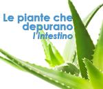 Le piante che depurano l'intestino