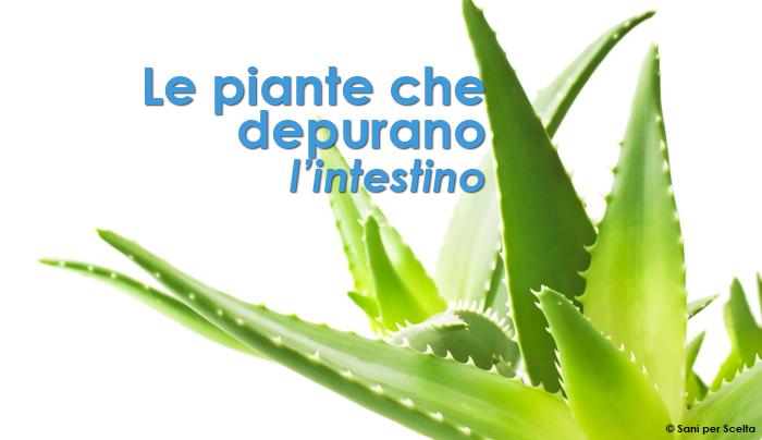 le-piante-che-depurano-lintestino